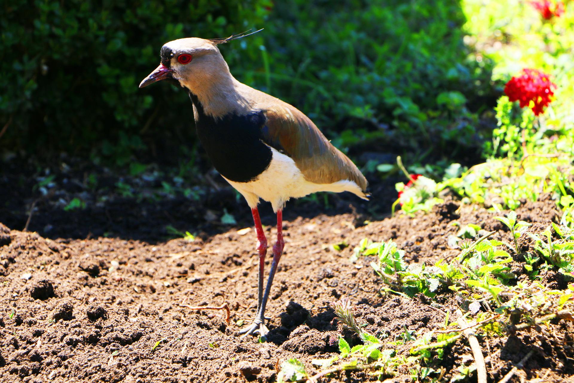 bird-botanical-gardens-curitiba