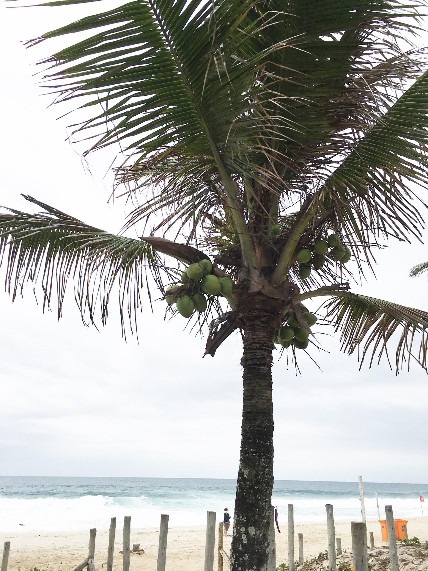 coconuts on ipanema beach
