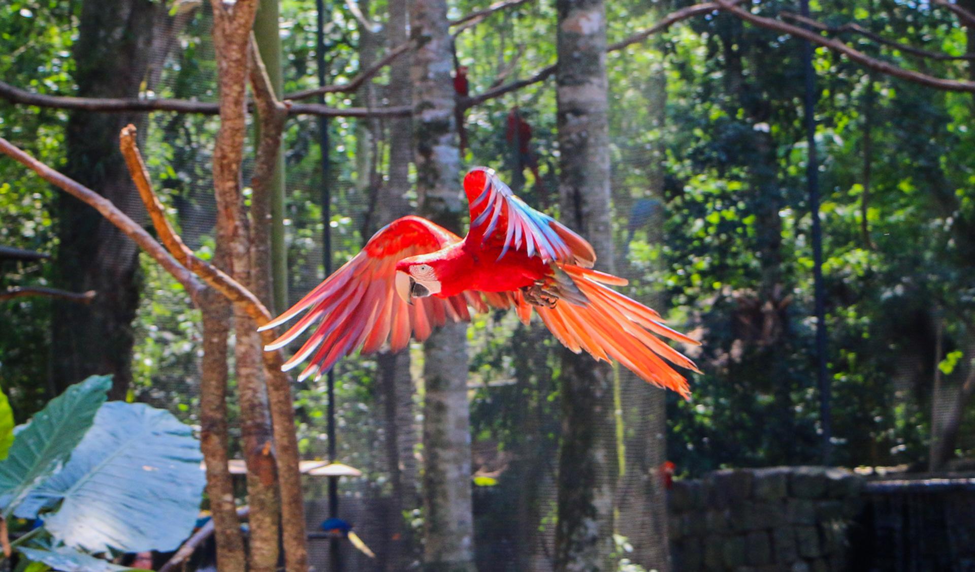 flying-parrot-parque-de-aves