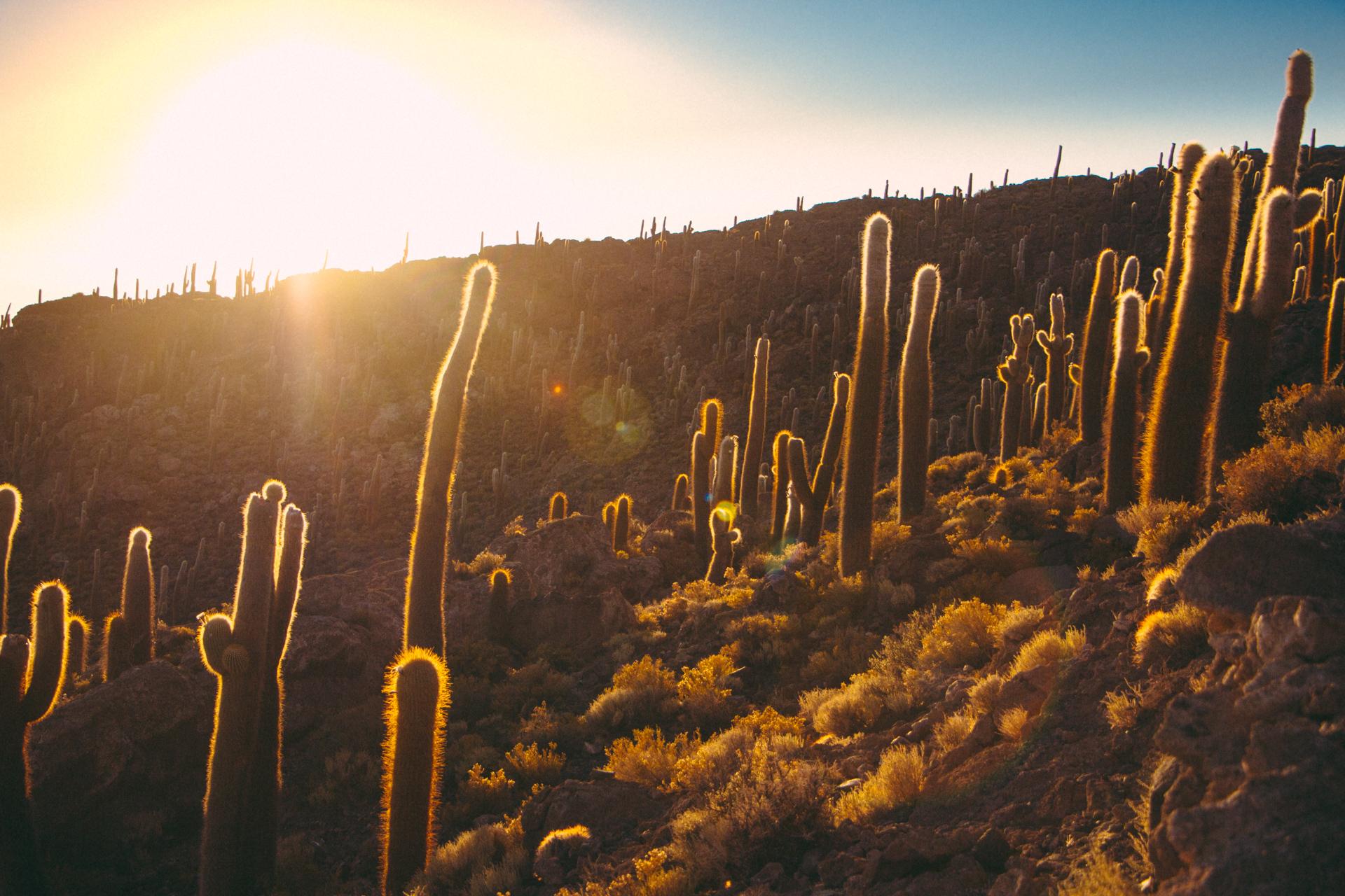 Salt Flat Cactus Island Sunrise