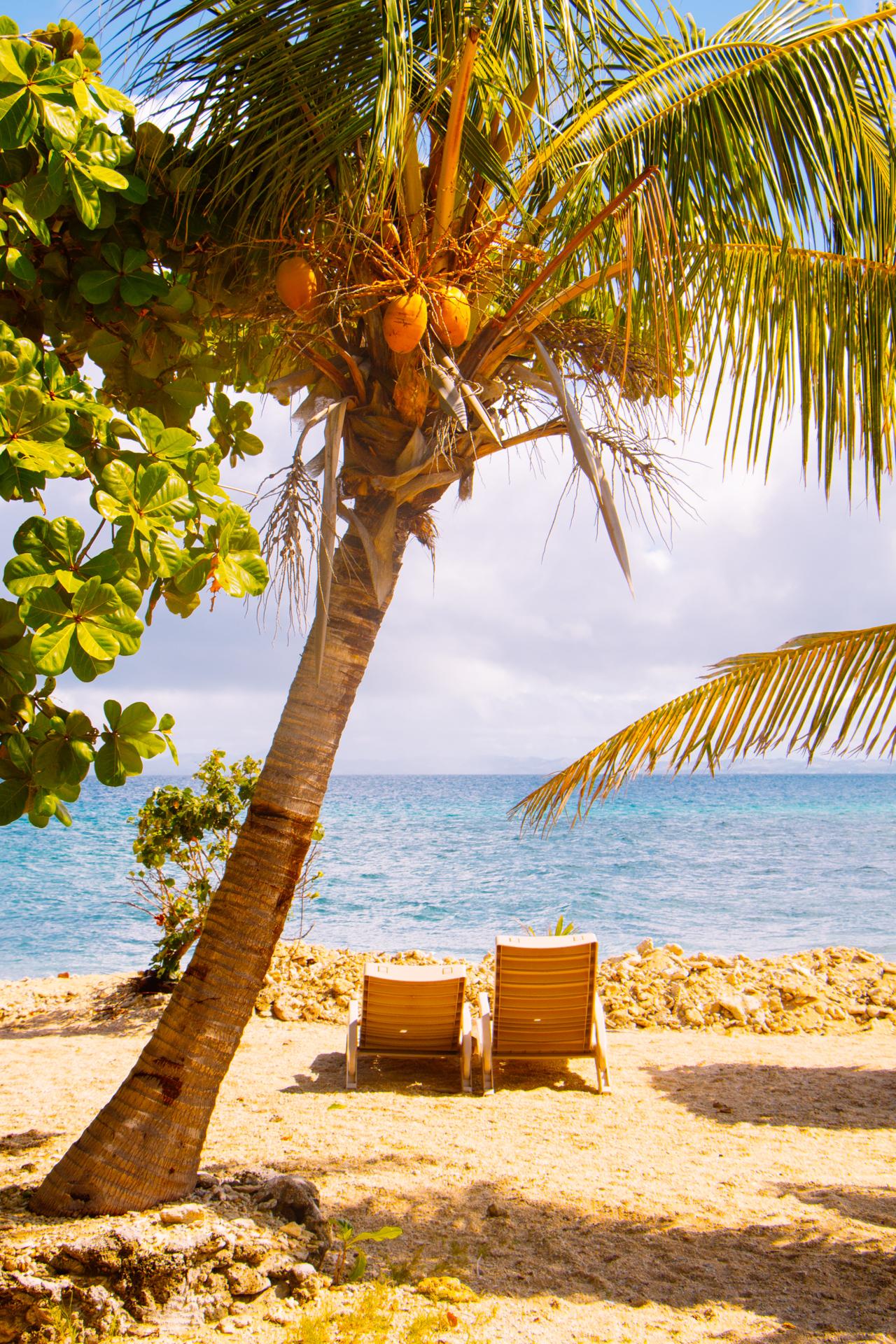 Coconut tree South Sea Island, Fiji