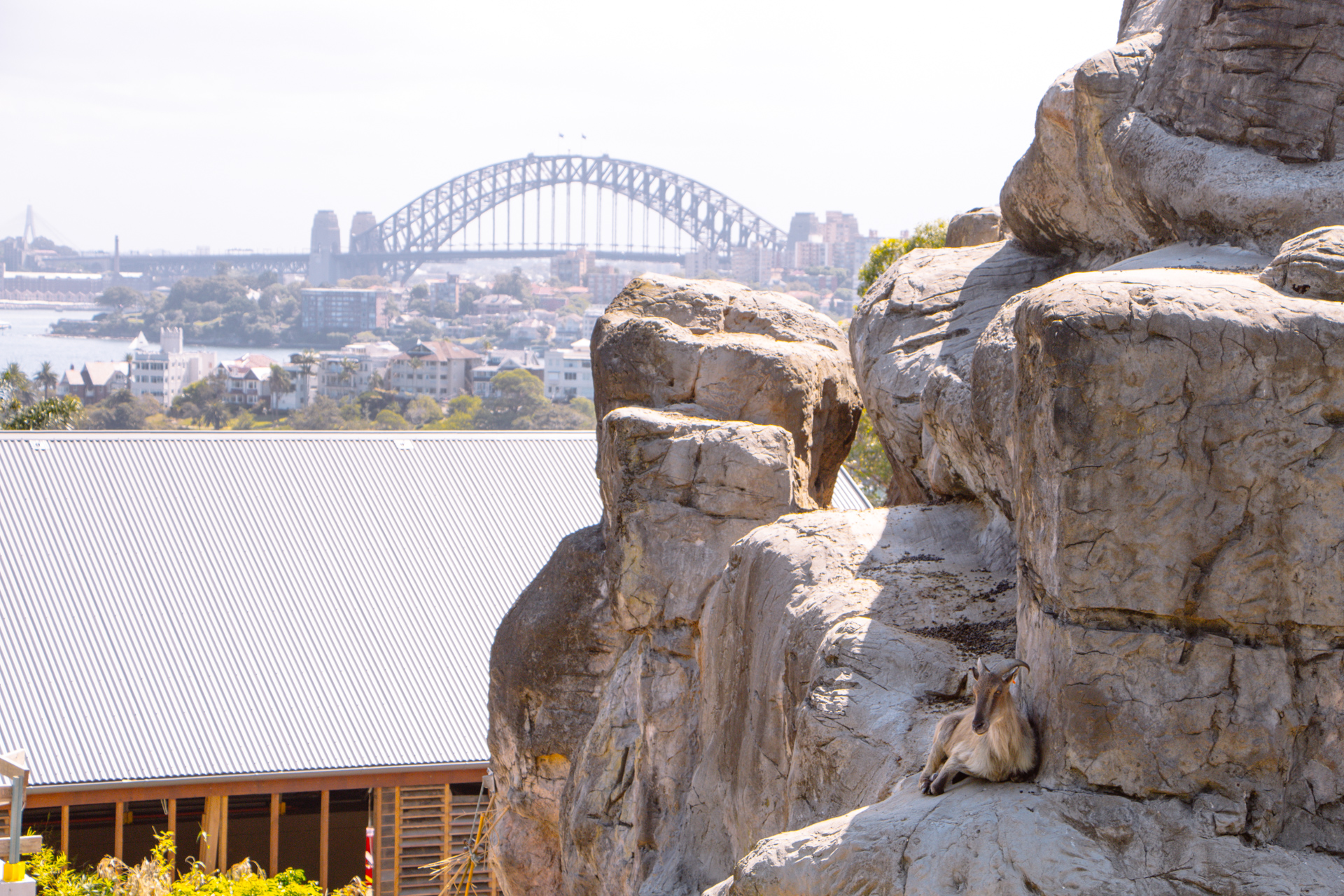 Sydney Zoo overlooking harbour and bay