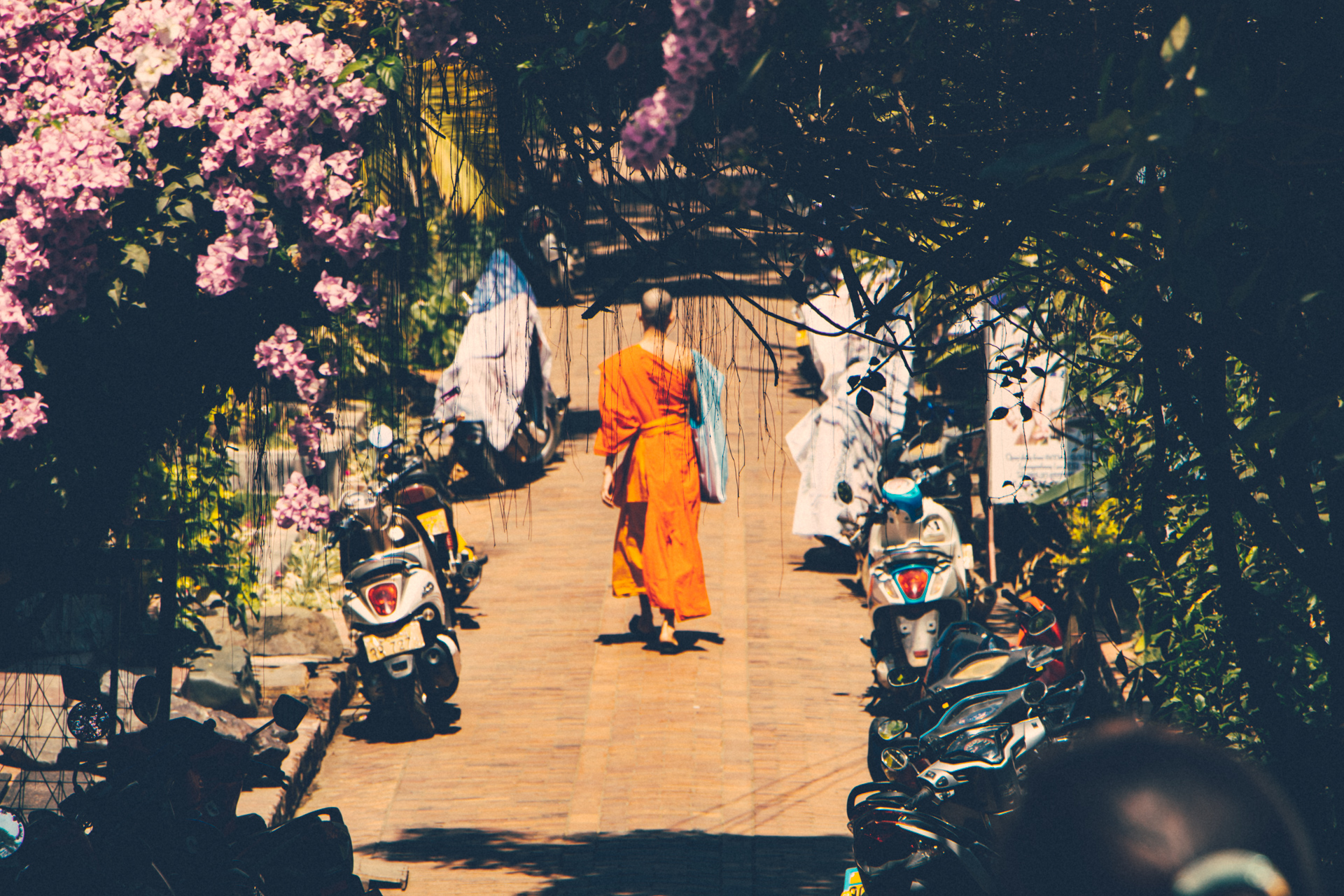 Monk walks into distance through flowers