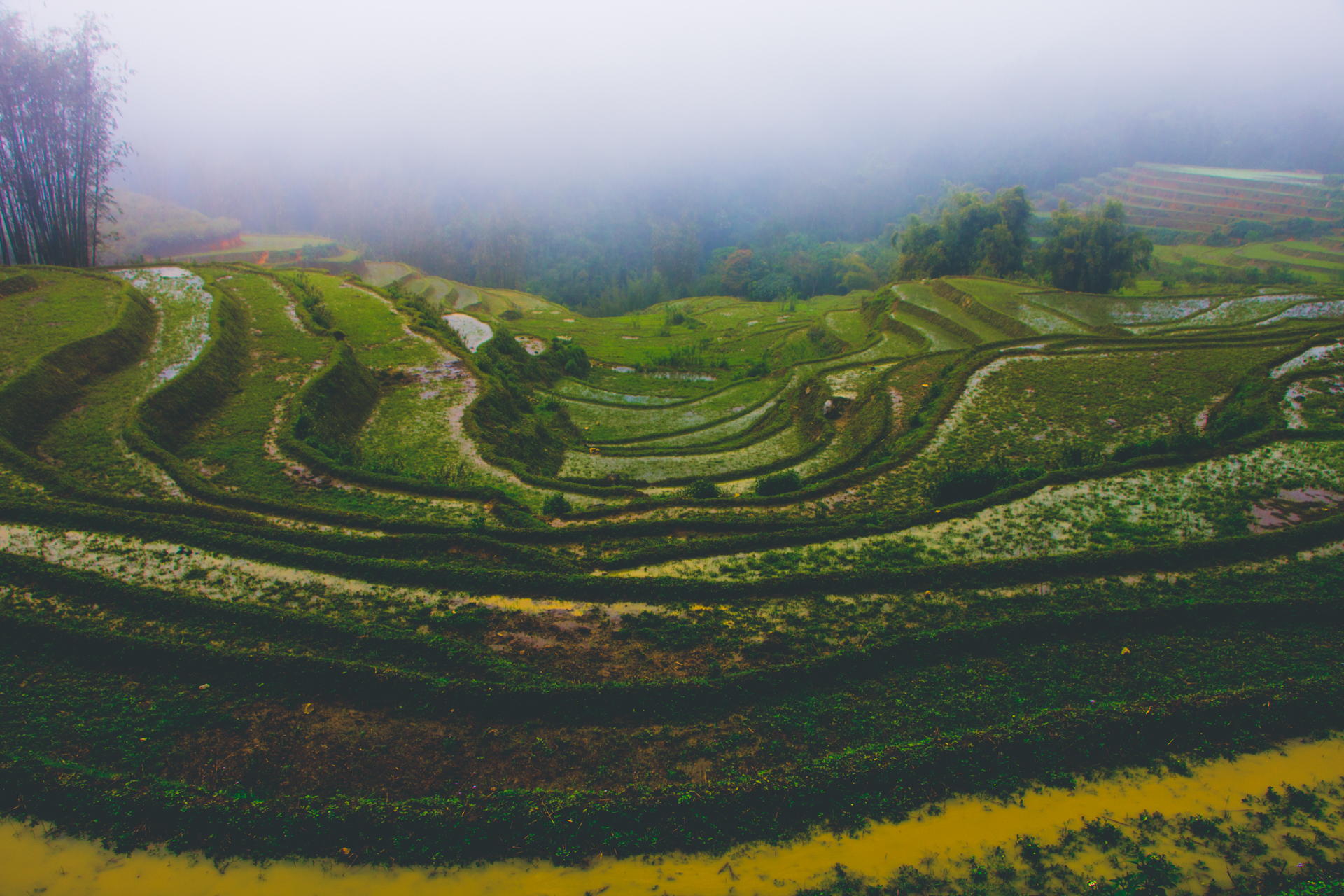 Staggered Rice Field View in Sapa, Vietnam