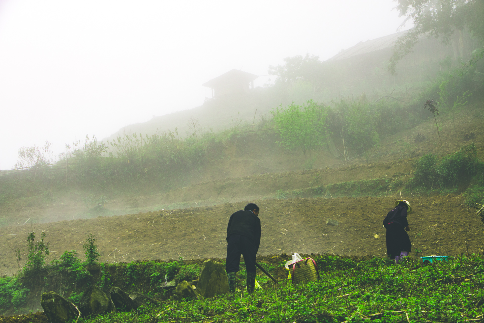 Rice Field Farmer in Sapa
